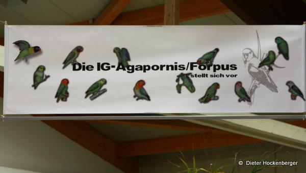 Die IG Agapornis/Forpus stellt sich vor
