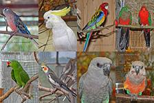 Lose Bildersammlung Sittiche und Papageien