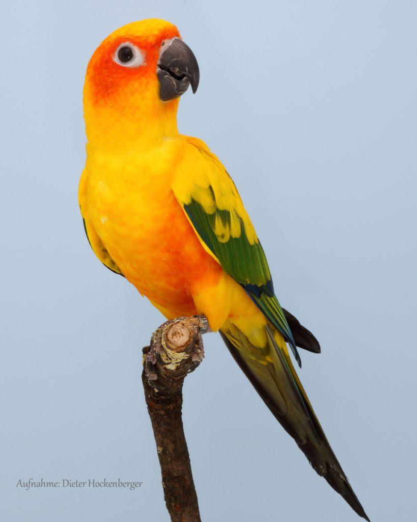 01-Landessieger 2019 sonstige GS-Papageien