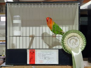 Fischeri-pastellgrün-Gruppensieger