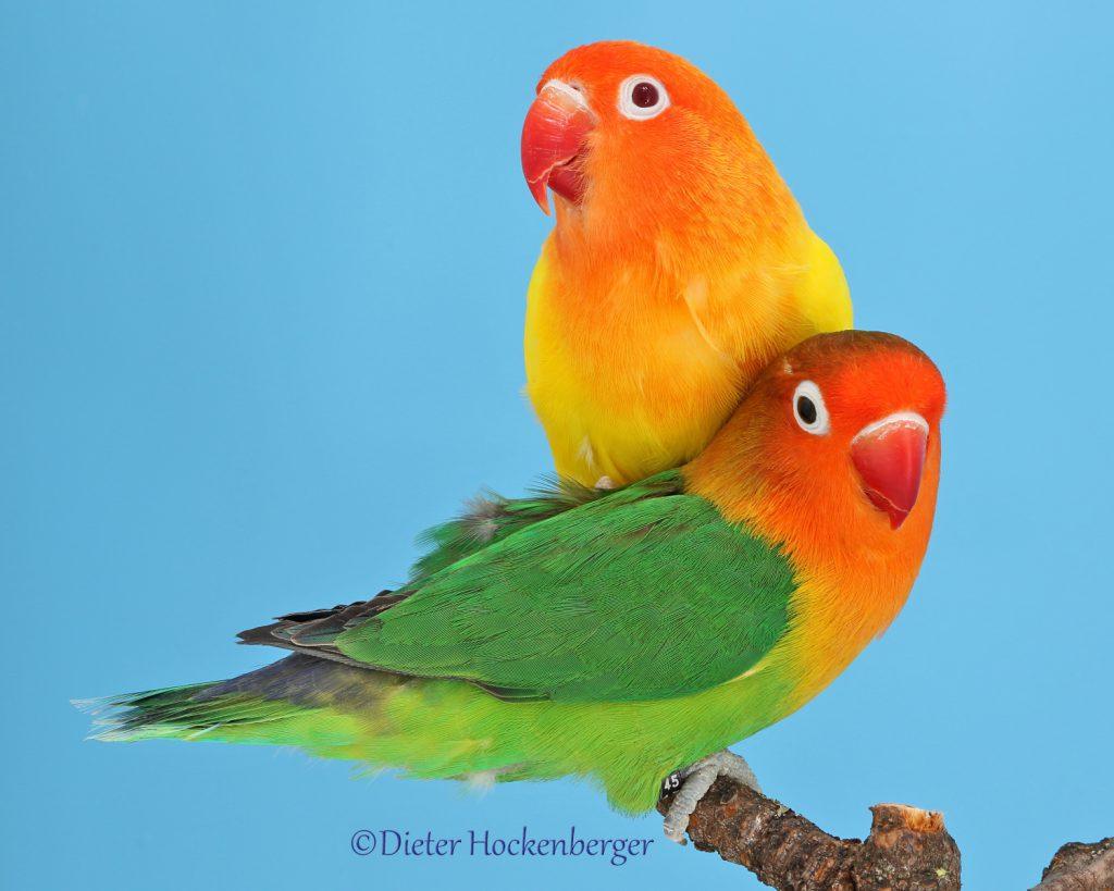 Aktuelle Abgabe-Vögel.