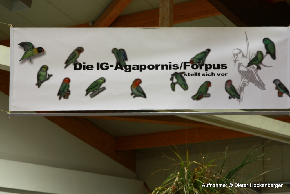 Banner-AZ-IG-Agapornis-Forpus-Sonderschau-2013